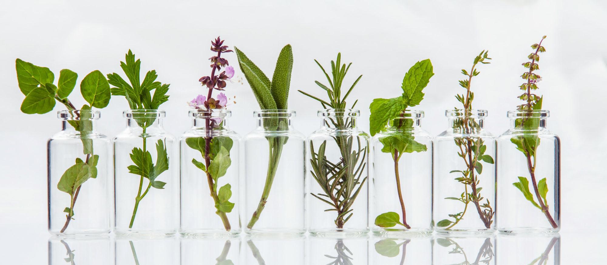 Phytotherapie in Gläsern